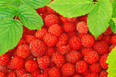 Raspberries decorated with green leaf as background — Stock Photo