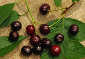Ripe cherry on the rough fabric as the background                — Stock Photo