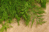 Green dill on the rough fabric as the background — Stock Photo
