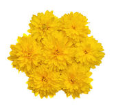 A composition in the form of a flower of yellow flowers isolated — Photo