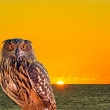 An owl and sunrise at West Palm Beach — 图库照片