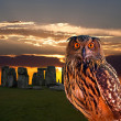 An owl and the mystery Stonehenge — Stock Photo