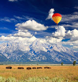 Bisons in Grand Teton National Park — 图库照片