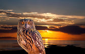 An owl and sunrise at The Salt Lake — Stock Photo