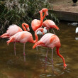 Red flamingo in a park in Florida — Stock Photo