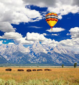 Bisons at the Antelope Flats in Grand Teton National Park — Stock Photo