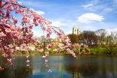 Die Cherry Blossom Festival in New jersey — Stockfoto