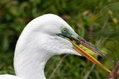 Tropical bird in a park in Florida — Stock Photo
