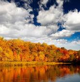 декорация листва — Стоковое фото