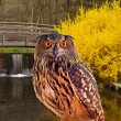 Owl at a state park — Stock Photo