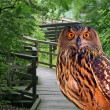 A young owl in a park — Stock Photo