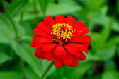 A flower displayed in a botanical garden — Stock Photo