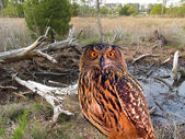 An owl at a state park — Stock Photo