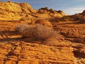 Formación rocosa en la barranca de la cañada — Foto de Stock