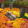 A Japanese Kiku flower show — Stock Photo