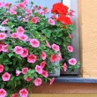 Flower window decorations in St. Wolfgang — Stock Photo #29404207