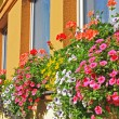 Flower window decorations in St. Wolfgang — Stock Photo #29404213