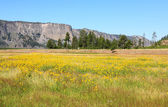 The scenery in the Yellowstone — Stock Photo