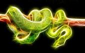 Snake art Design — Stock Photo