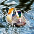Duck art Design — Stock Photo