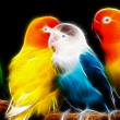 Parrot art Design — Stock Photo