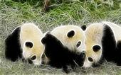 Panda art design — Stock Photo