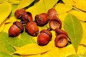 El otoño — Foto de Stock