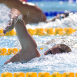 SWM: World Aquatics Championship. RyCochran — Stock Photo #29116167