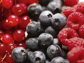 Mixed berry fruit — Stock Photo