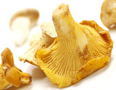 Chantarelles on a white background with shadow — Stock Photo