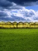 Greenhouse at sunset — Stock Photo