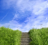 Green grass on a dike with stairs — Stock Photo