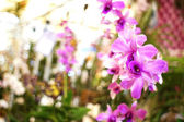 Orchids in bokeh background — Zdjęcie stockowe