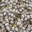 Sort shell at koh larn Patatya, Chon buri — Foto Stock