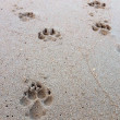 Stock Photo: Dog footprint on the tropical beach.