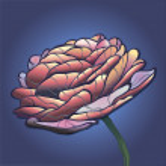 Peony flower — Stock Vector #33948475