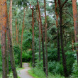 Weg in den Wald — Stock Photo