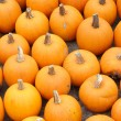 Pumpkin time — Stock Photo #31057795
