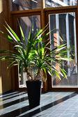 Lobide palmiye ağacı — Stok fotoğraf