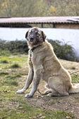 Un cane in cortile — Foto Stock