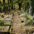 Prague cemetery Olsany — Stock Photo