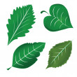 Stock Vector: Four icons of leafs