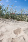 Sandy beach — Stockfoto