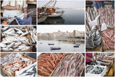 Fishing industry. Collage — Stock Photo