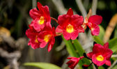 Thailand orchid,Flowers. — Stock Photo