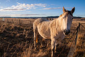 Horse with sunset light. — Stock Photo