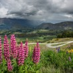 Beautiful landscape of New Zealand. — Stock Photo #38335127