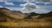 ニュージーランドの風景 — ストック写真