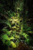 Landscape of New Zealand — Stock Photo