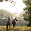 Stock Photo: Horse in farm